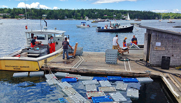 Lobstermen working on along the waterfront